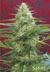 Satori regular (10-100 seeds)